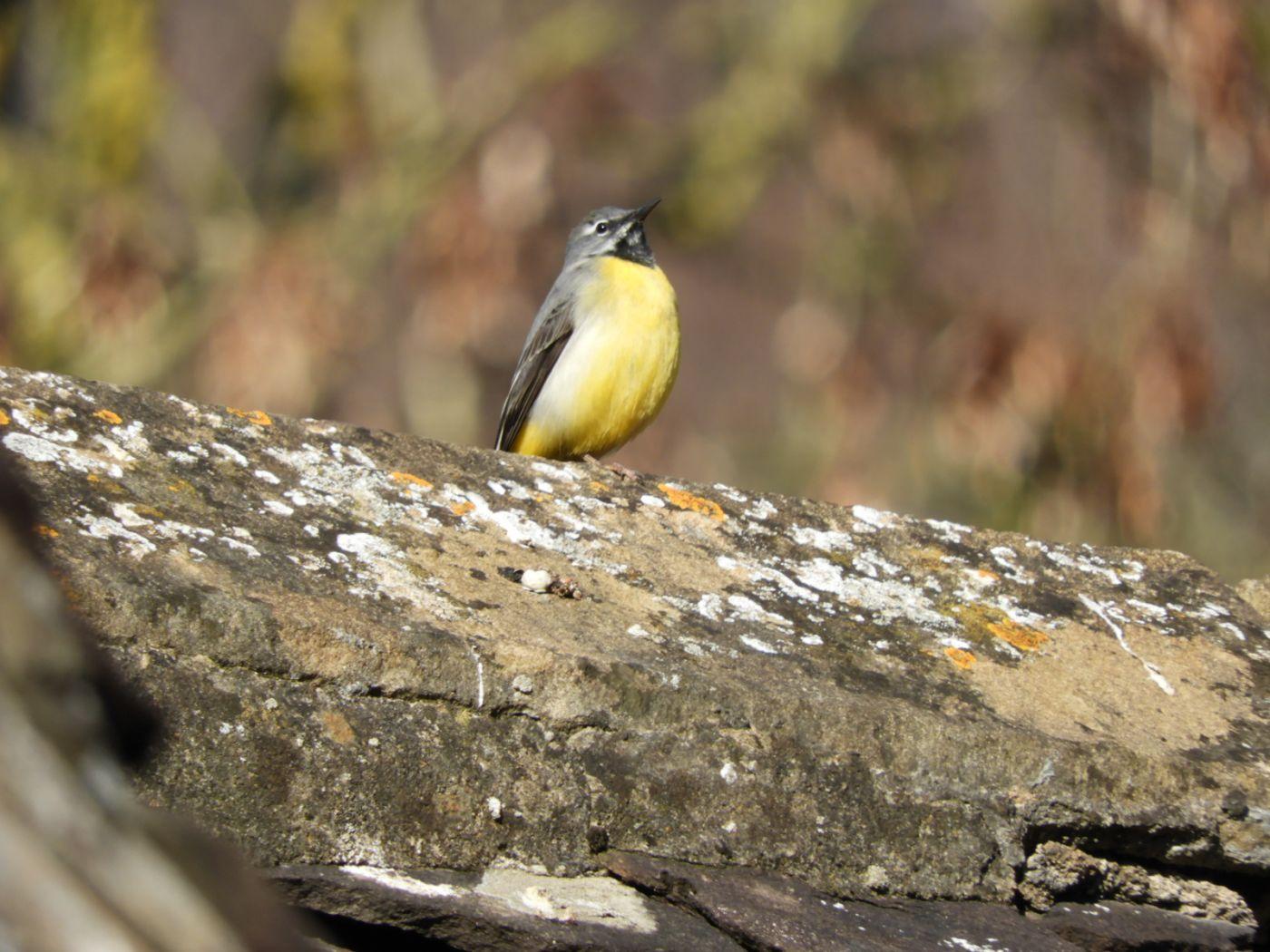 Close up of bird