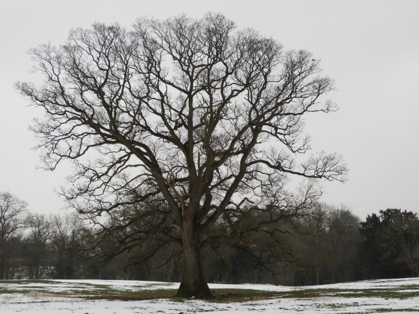 Tree in the snow